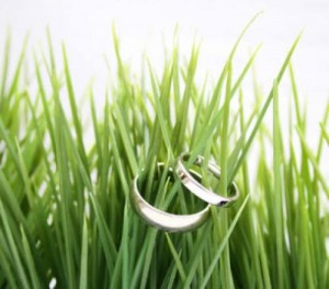 Tendenze. Il matrimonio si fa Green ed Eco-Chic